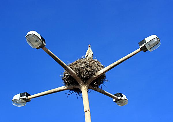 stork web.jpg