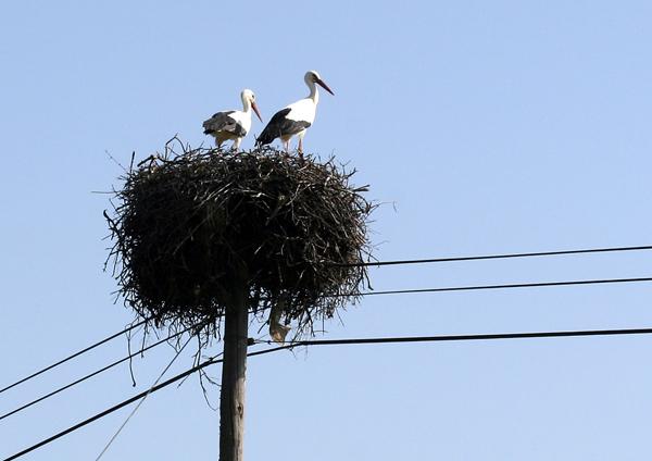 storks small1.jpg